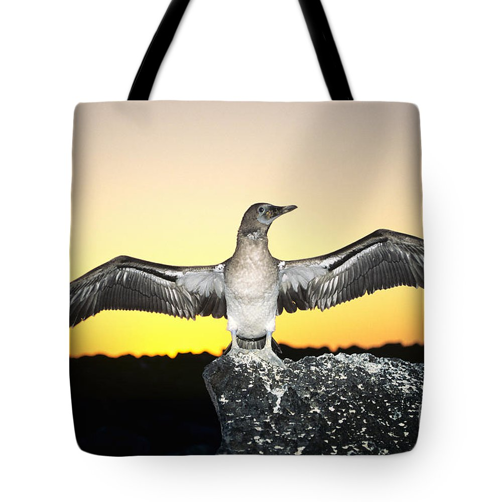 Animal Art Tote Bag featuring the photograph Booby At Sunset by Dave Fleetham - Printscapes