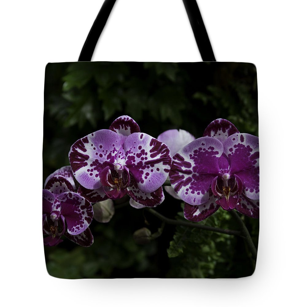 Orchids In Focus Tote Bag featuring the photograph Botanic Garden Orchid Bouquet 3 by Rebecca Snyder