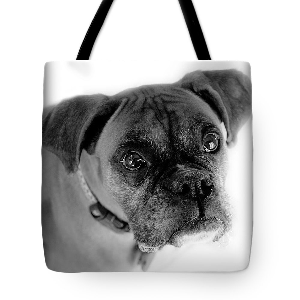 Boxer Tote Bag featuring the photograph Boxer Dog by Marilyn Hunt