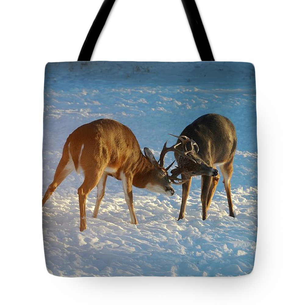 White Tailed Deer Tote Bag featuring the photograph Boys Will Be Boys by Sandra Updyke