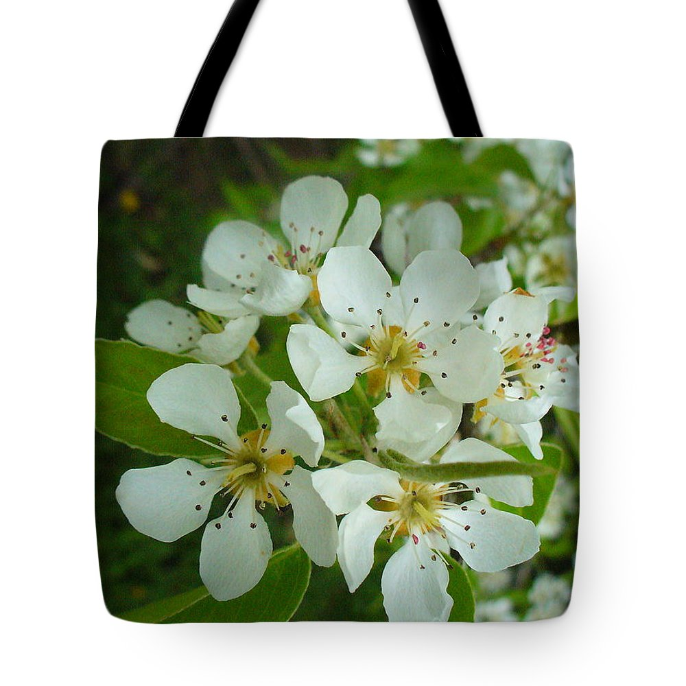 Nature Tote Bag featuring the photograph Brandy In Bud On The Pear Tree by Peggy King