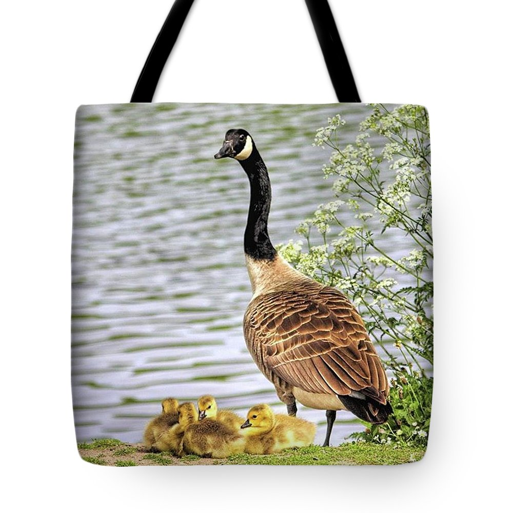 Geese Tote Bag featuring the photograph Branta Canadensis  #canadagoose by John Edwards