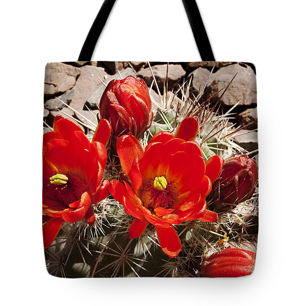 Blossoms Tote Bag featuring the photograph Bright Orange Cactus Blossoms by Phyllis Denton