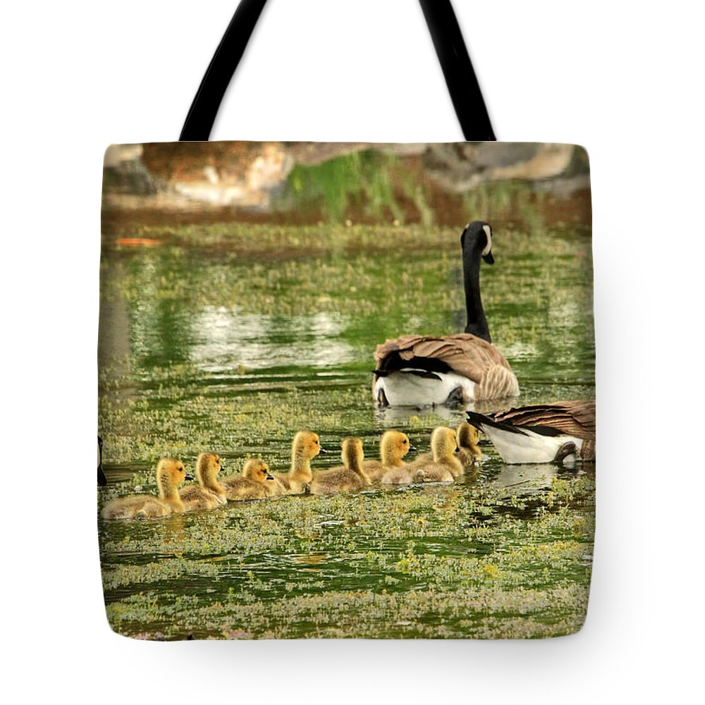 Canada Goose Tote Bag featuring the photograph Bringing Up The Rear by Donna Kennedy