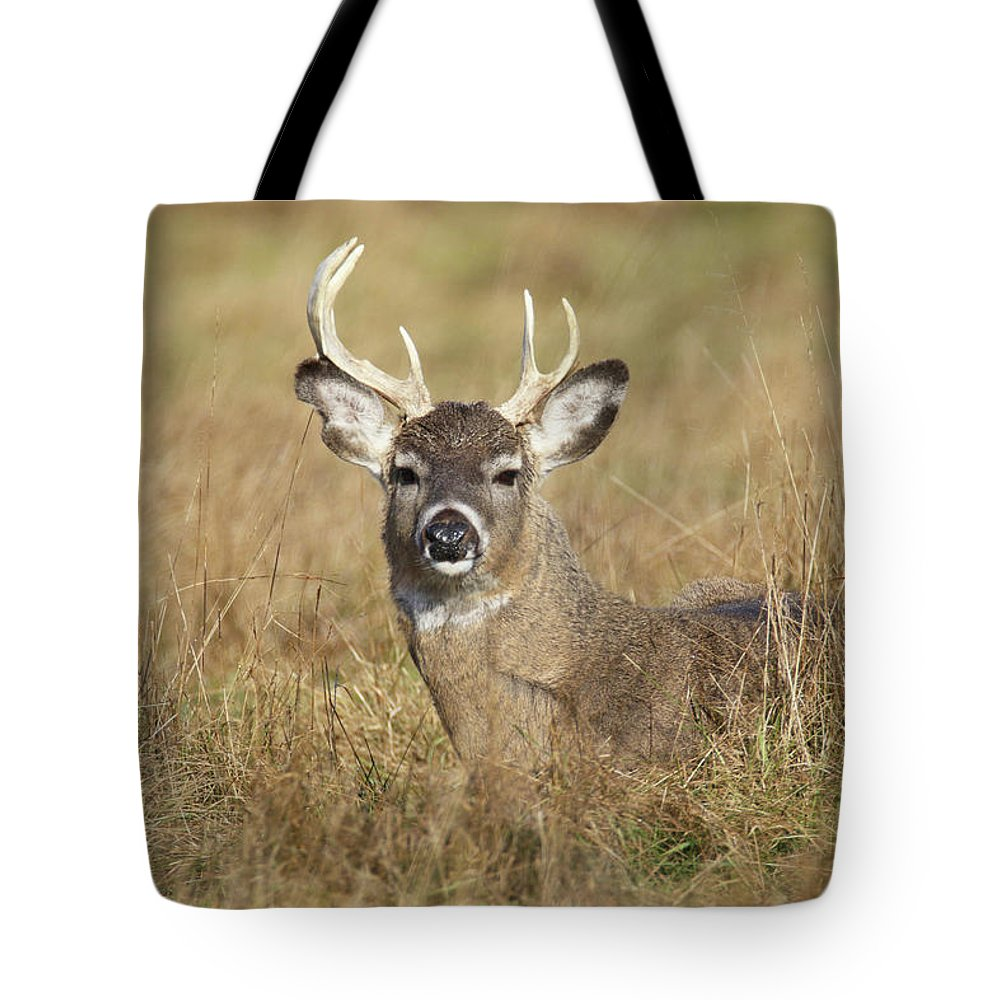 Buck Tote Bag featuring the photograph Broken Antler Buck by Brook Burling