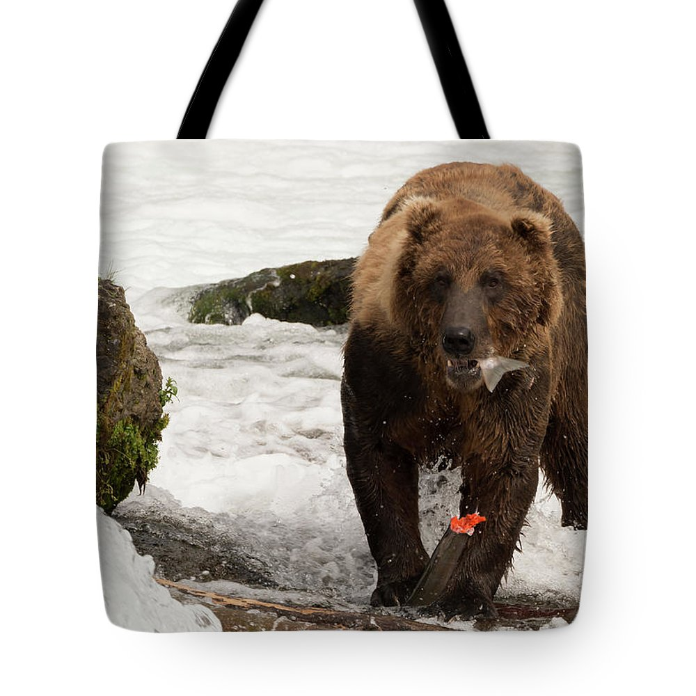 Alaska Tote Bag featuring the photograph Brown Bear Eating Salmon Tail Beside Rocks by Ndp