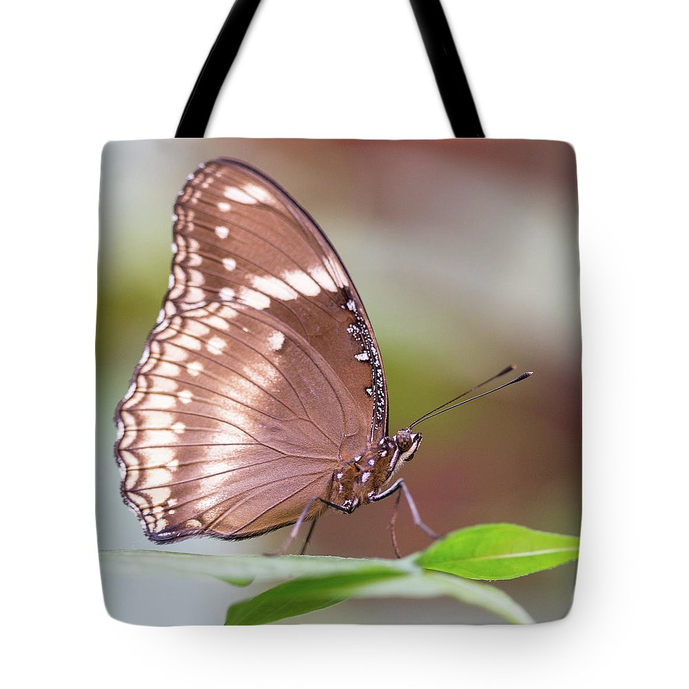 Brown Tote Bag featuring the photograph Brown Butterfly by Steven Jones