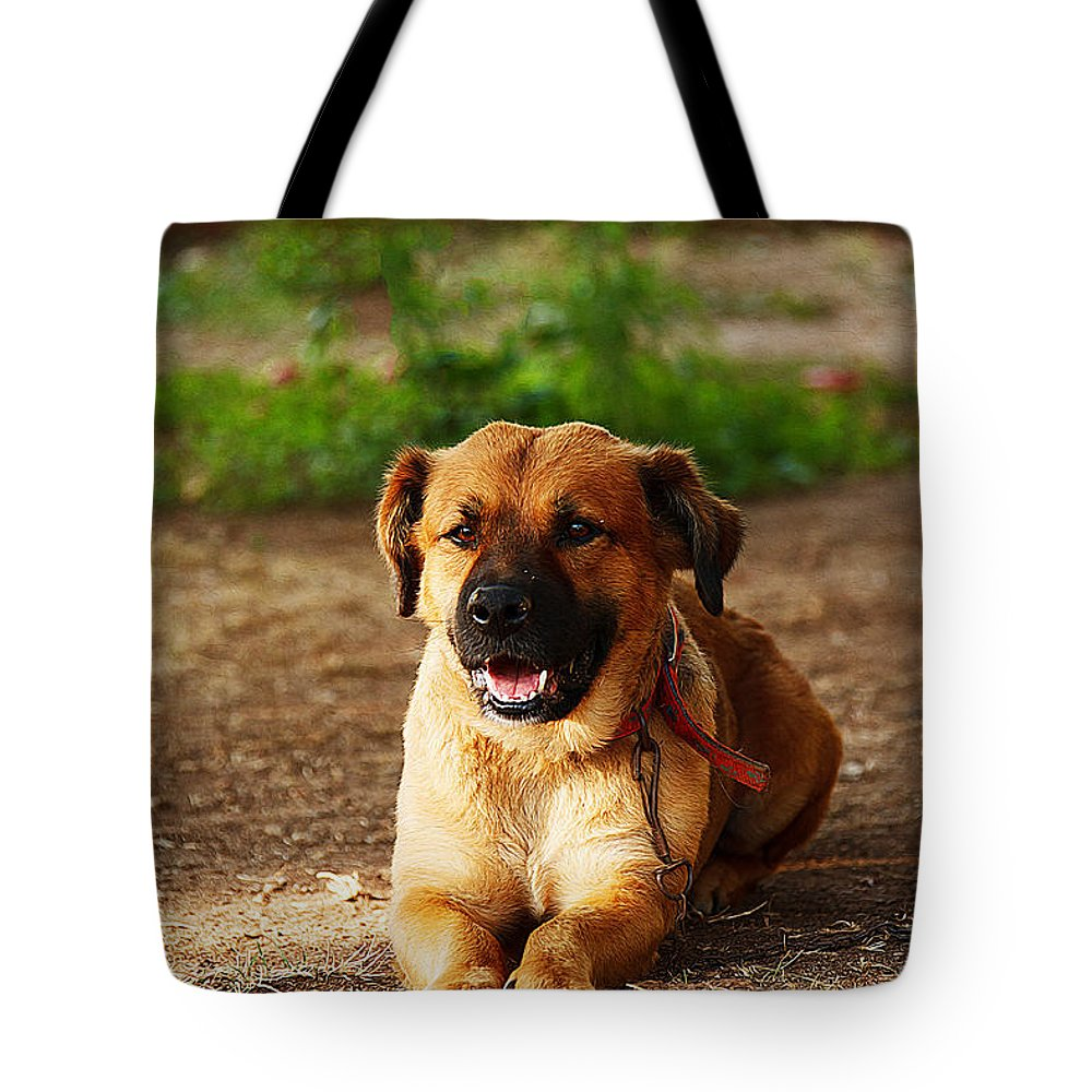 Dog Art Tote Bag featuring the painting Brown Dog Lying by Queso Espinosa