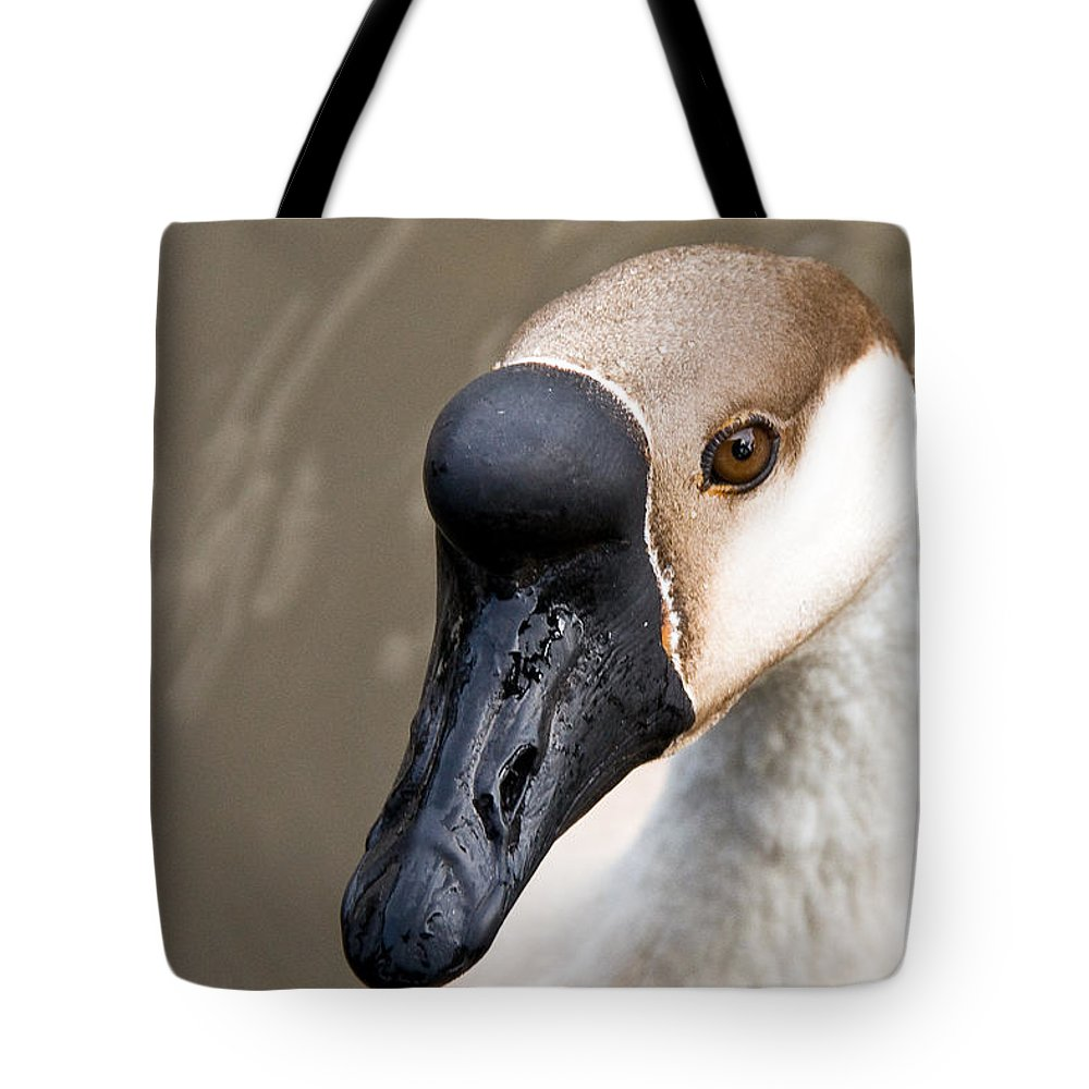 Chinese Brown Goose Tote Bag featuring the photograph Brown Eye by Christopher Holmes