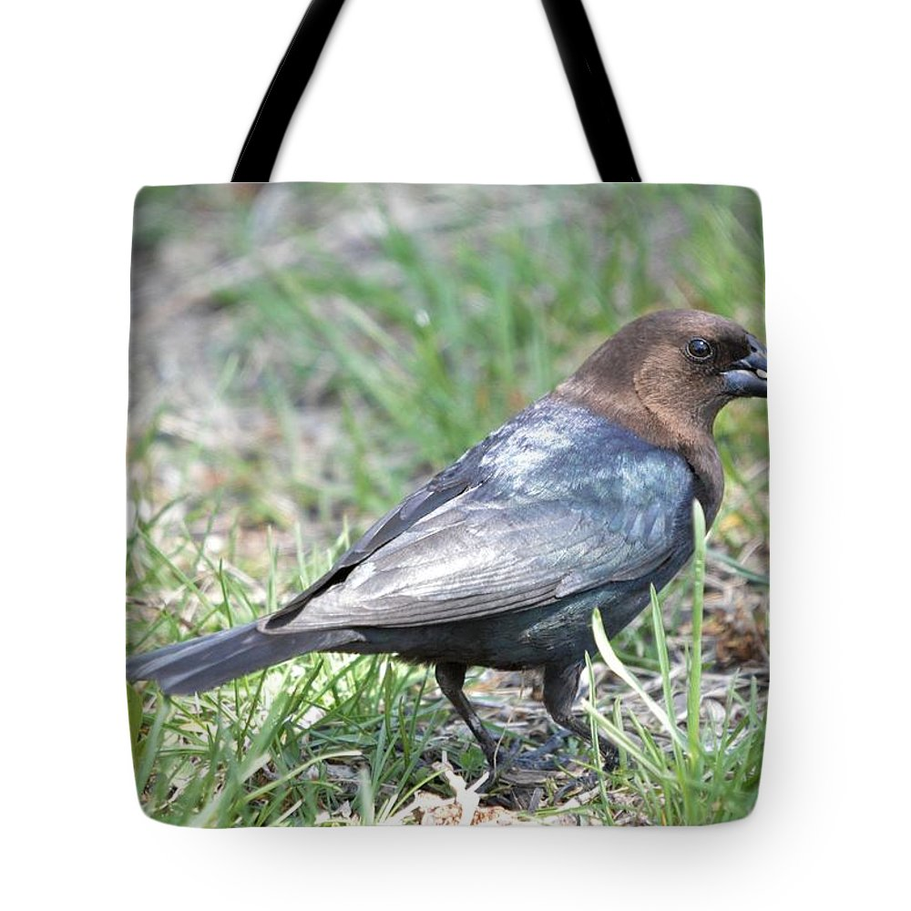 Animal Tote Bag featuring the photograph Brown-headed Cowbird 2 by Bonfire Photography