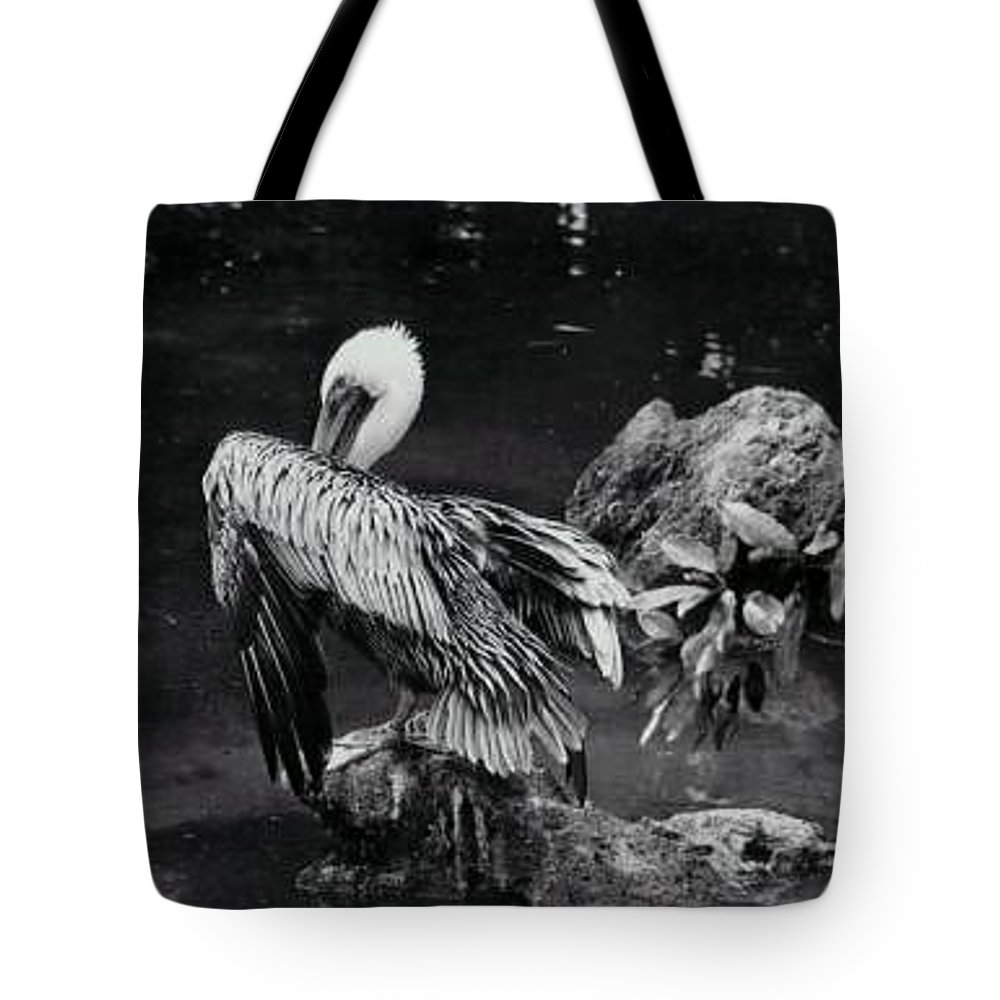Brown Pelican Tote Bag featuring the photograph Brown Pelican by Melanie Neer