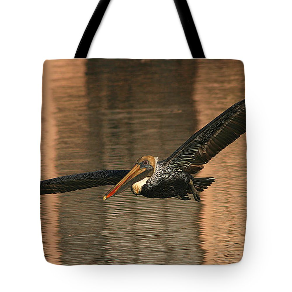 Pelican Tote Bag featuring the photograph Brown Pelican On A Sunset Flyby by Max Allen