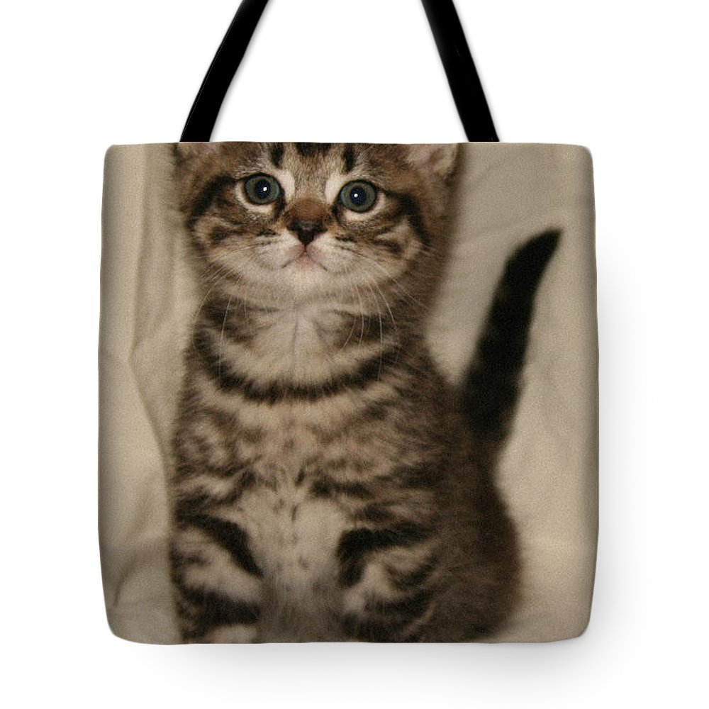 Cat Tote Bag featuring the pyrography Brown Tabby Straight Ear by Robert Morin