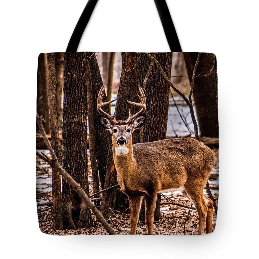 Deer Tote Bag featuring the photograph Buck by Lowlight Images