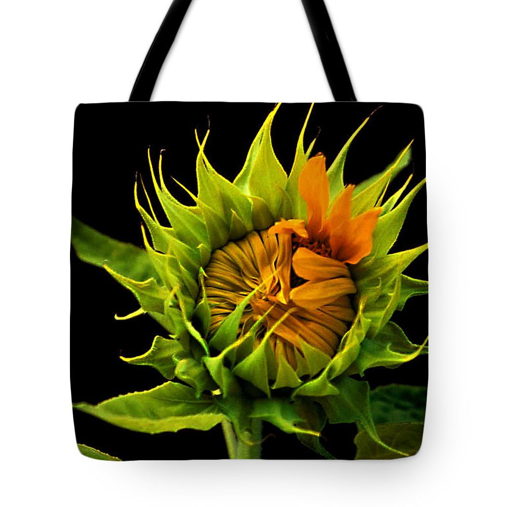 Gerber Daisy Tote Bag featuring the photograph Budding Beauty by Laurie Paci