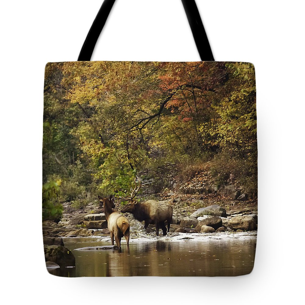 Bull Elk Tote Bag featuring the photograph Bull And Cow Elk In Buffalo River Crossing by Michael Dougherty