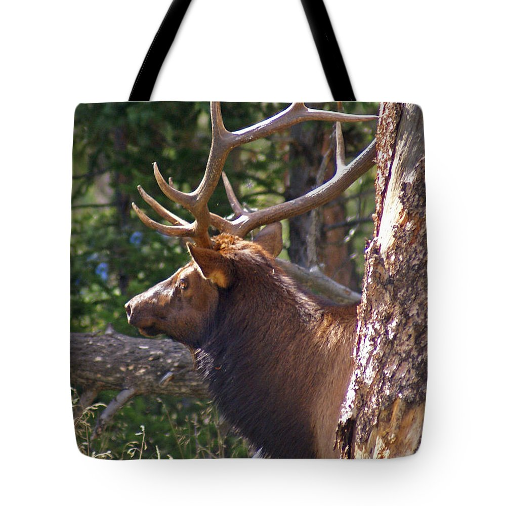 Elk Tote Bag featuring the photograph Bull Elk 2 by Heather Coen