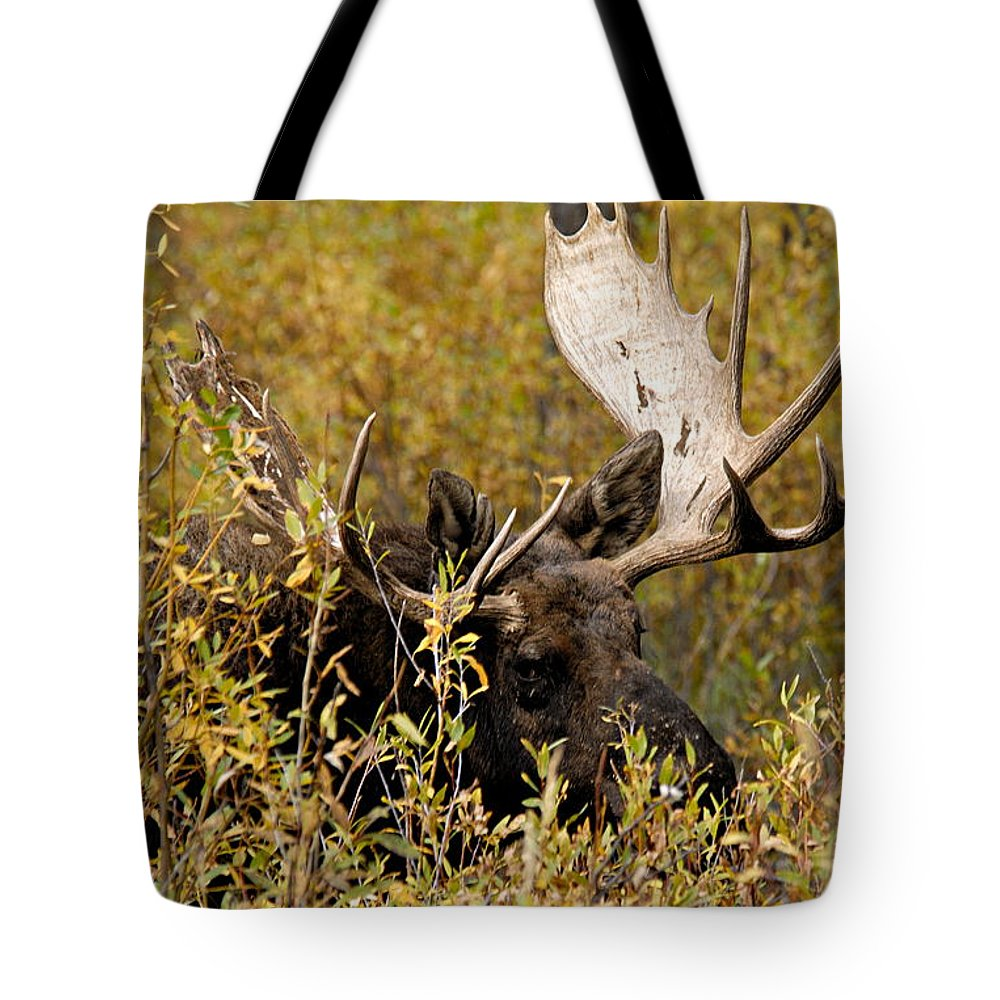 Grand Teton National Park Tote Bag featuring the photograph Bull Moose In Hiding by Larry Ricker