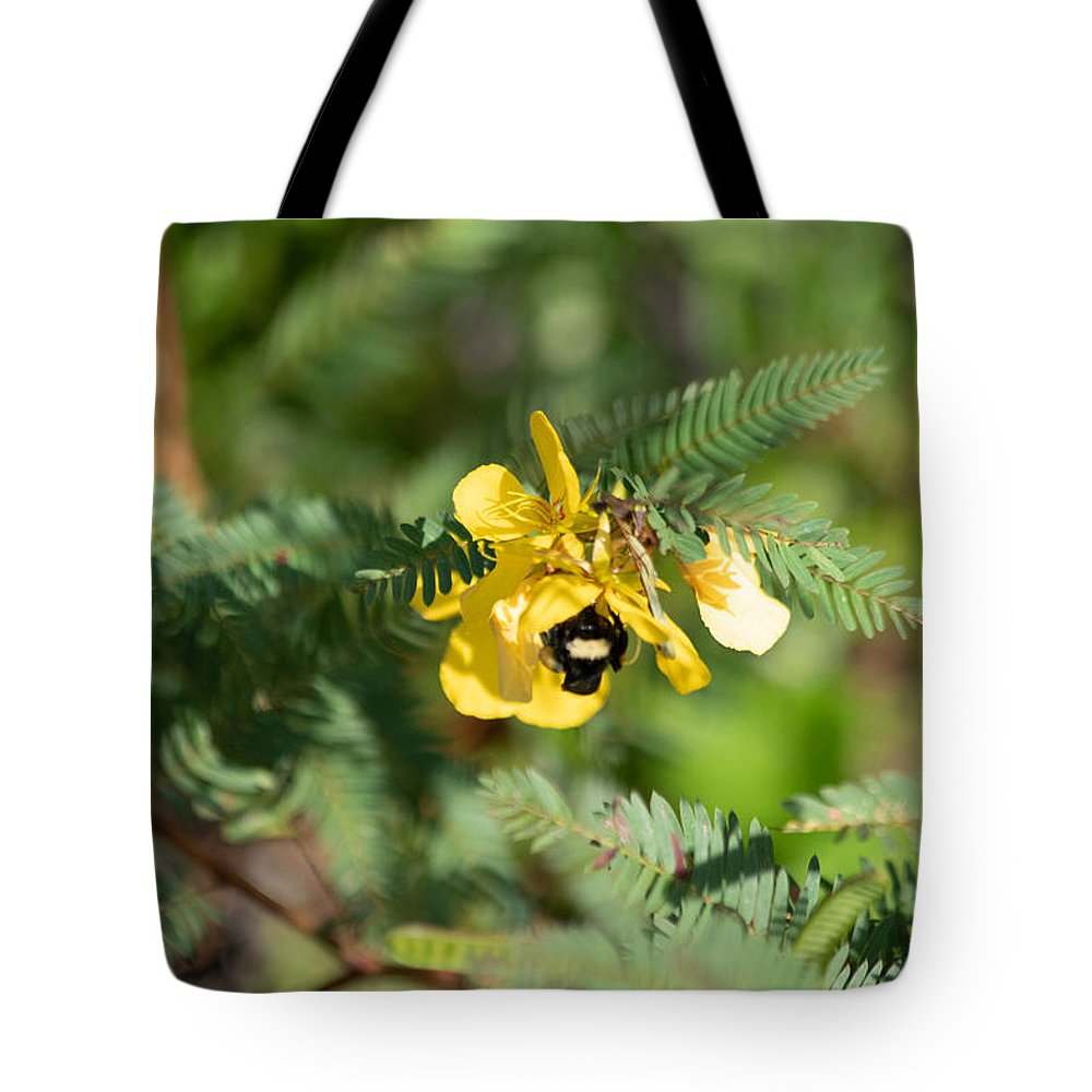 Chamaecrista Fasciculata Sleeping Plant Partridge Pea Tote Bag featuring the photograph Bumblebee Deep Into Work by JR Cox