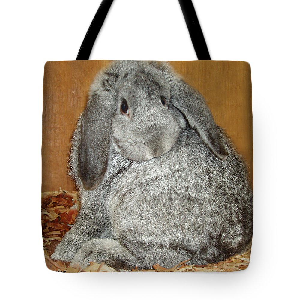 Bunny Tote Bag featuring the photograph Bunny by Gina De Gorna