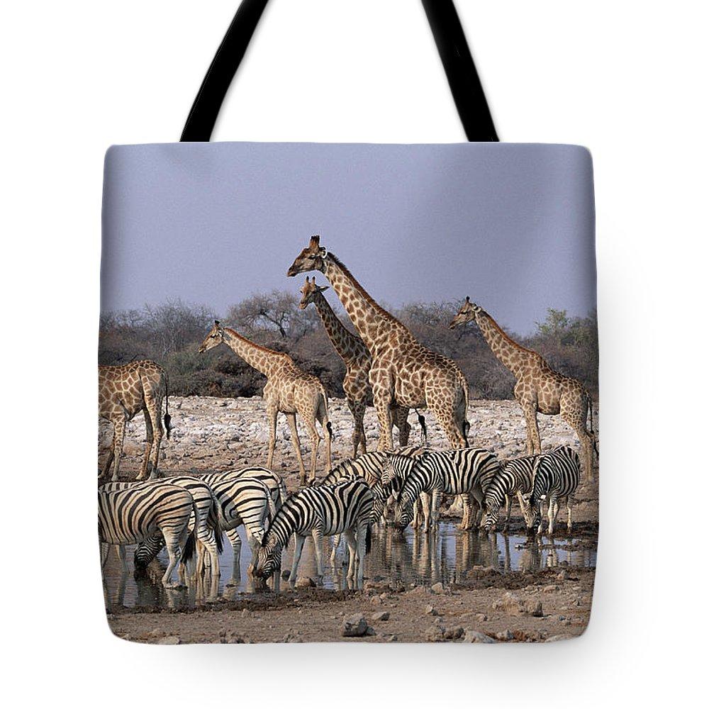 Mp Tote Bag featuring the photograph Burchells Zebra Equus Burchellii by Michael & Patricia Fogden