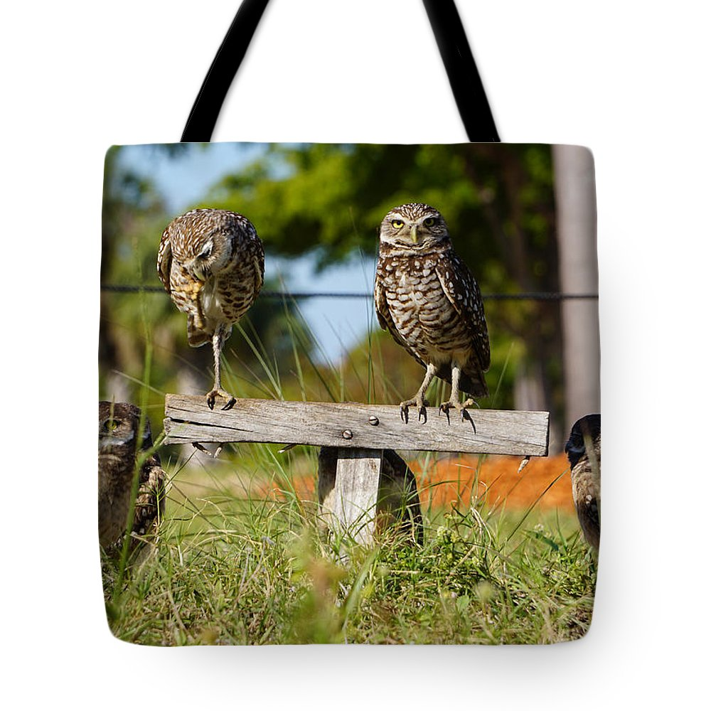 Owls Tote Bag featuring the photograph Burrow Family by Joey Waves