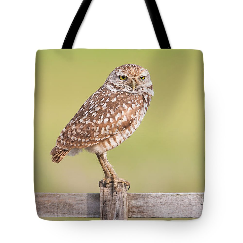 Clarence Holmes Tote Bag featuring the photograph Burrowing Owl IIi by Clarence Holmes