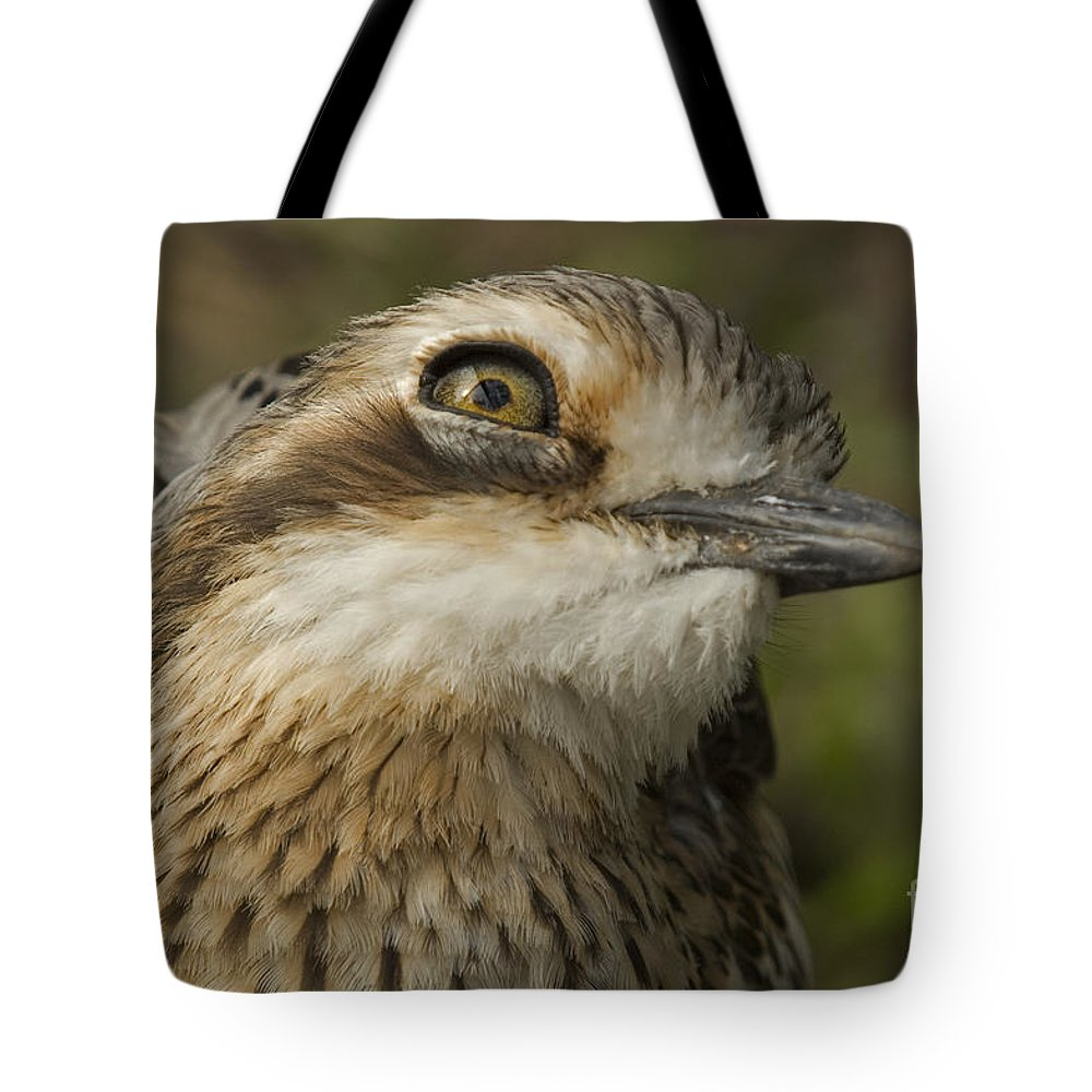 Bird Tote Bag featuring the photograph Bush Stone Curlew by Susan Adey