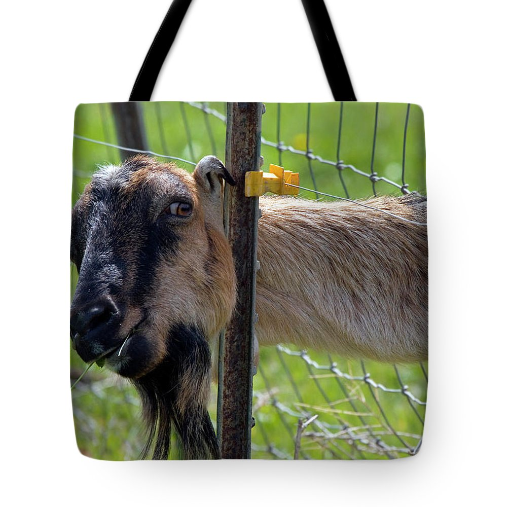 Goat Tote Bag featuring the photograph Busted by Mike Dawson