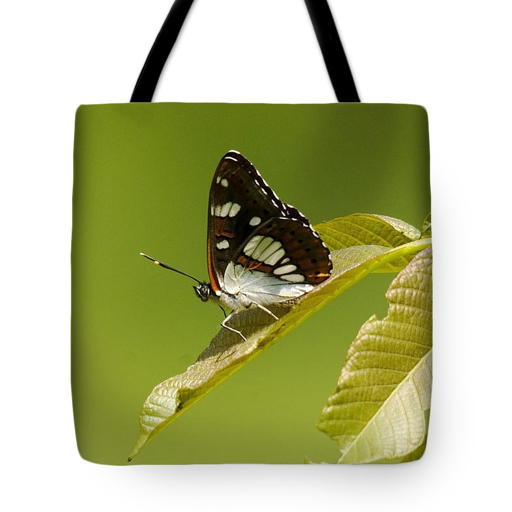 Nature Tote Bag featuring the photograph Butterfly by Cliff Norton
