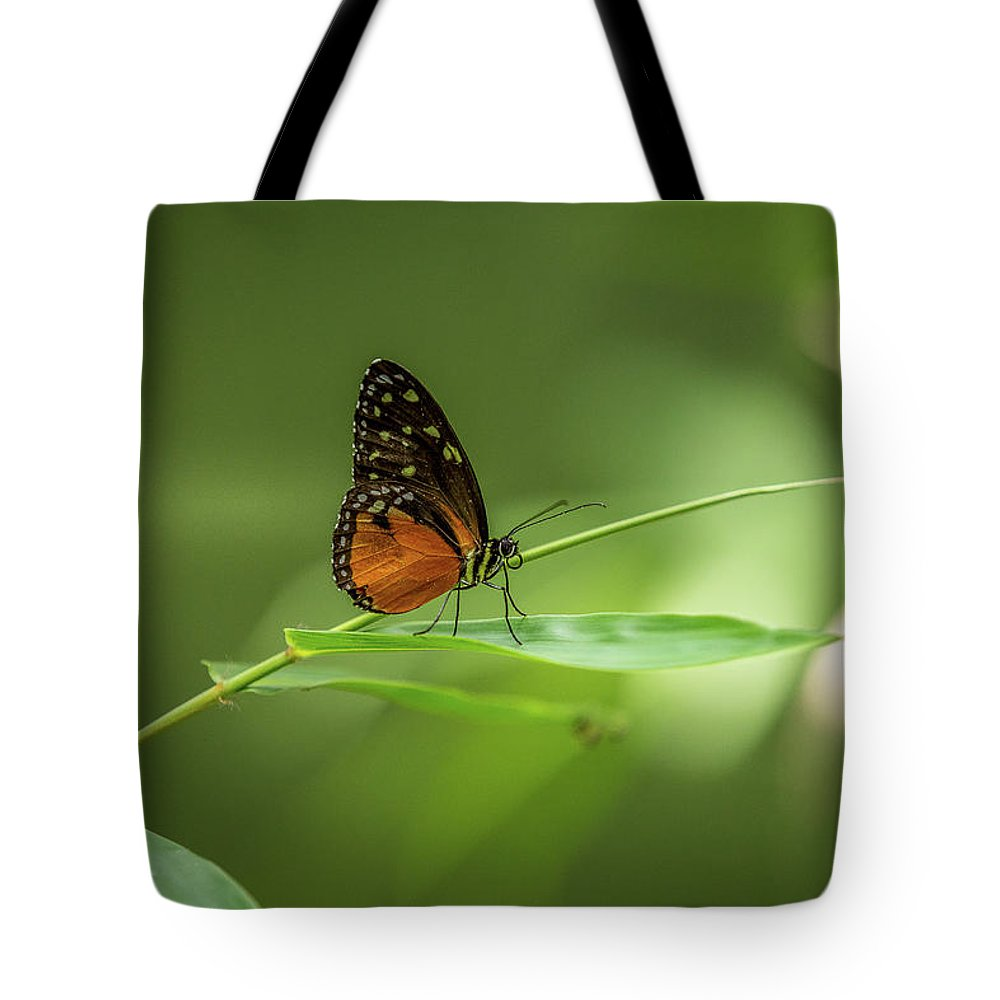 Butterfly Tote Bag featuring the photograph Golden Helicon Butterfly by Jimmy Tran
