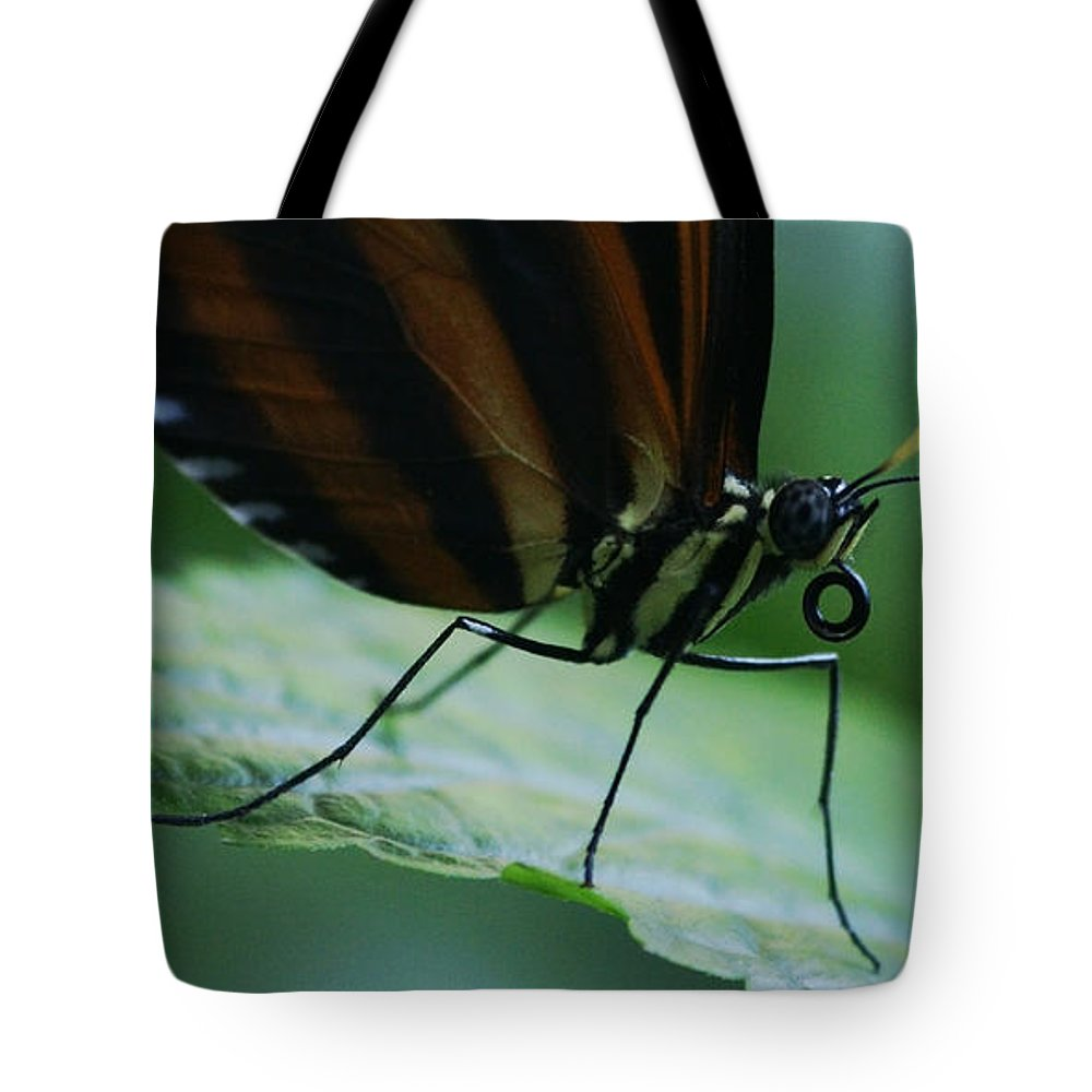 Butterfly Tote Bag featuring the photograph Butterfly Leaf by Linda Shafer