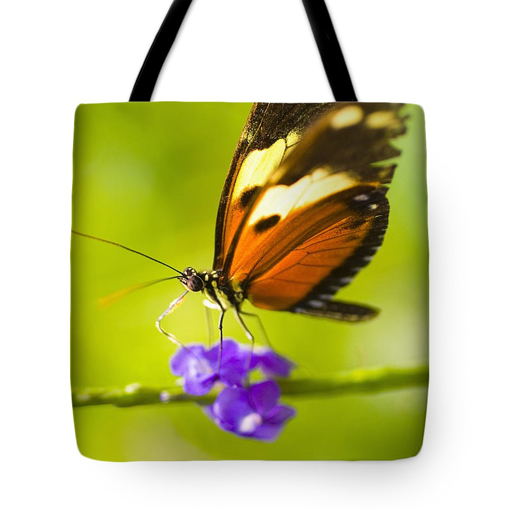 Afternoon Tote Bag featuring the photograph Butterfly On Flower by Tomas del Amo - Printscapes