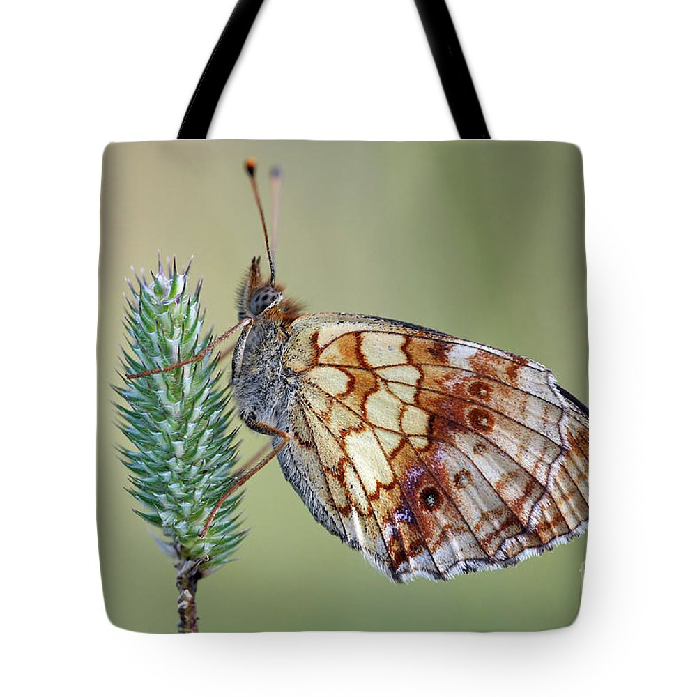 Insect Tote Bag featuring the photograph Butterfly On The Grass by Michal Boubin