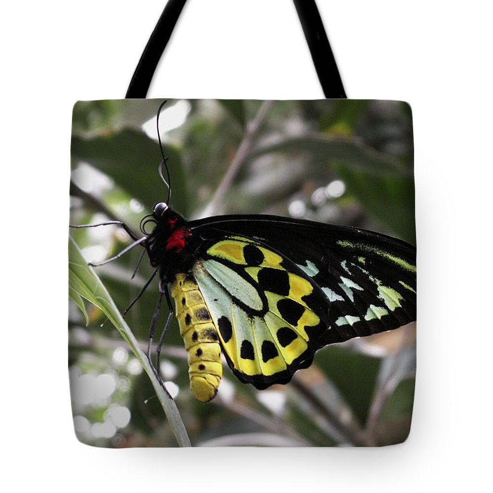 Butterfly Tote Bag featuring the photograph Butterfly One by Nancy Griswold