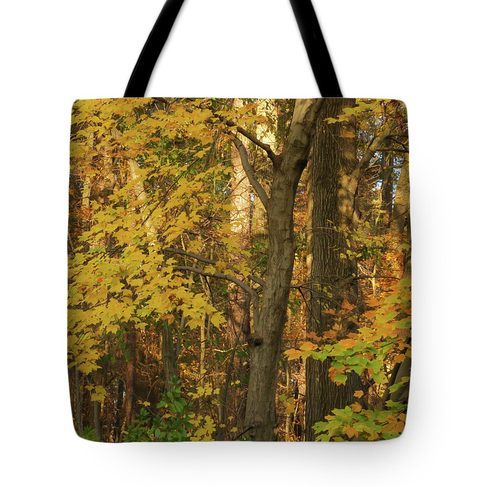 Gold Leaves Tote Bag featuring the photograph Butterscotch Autumn by Ola Allen
