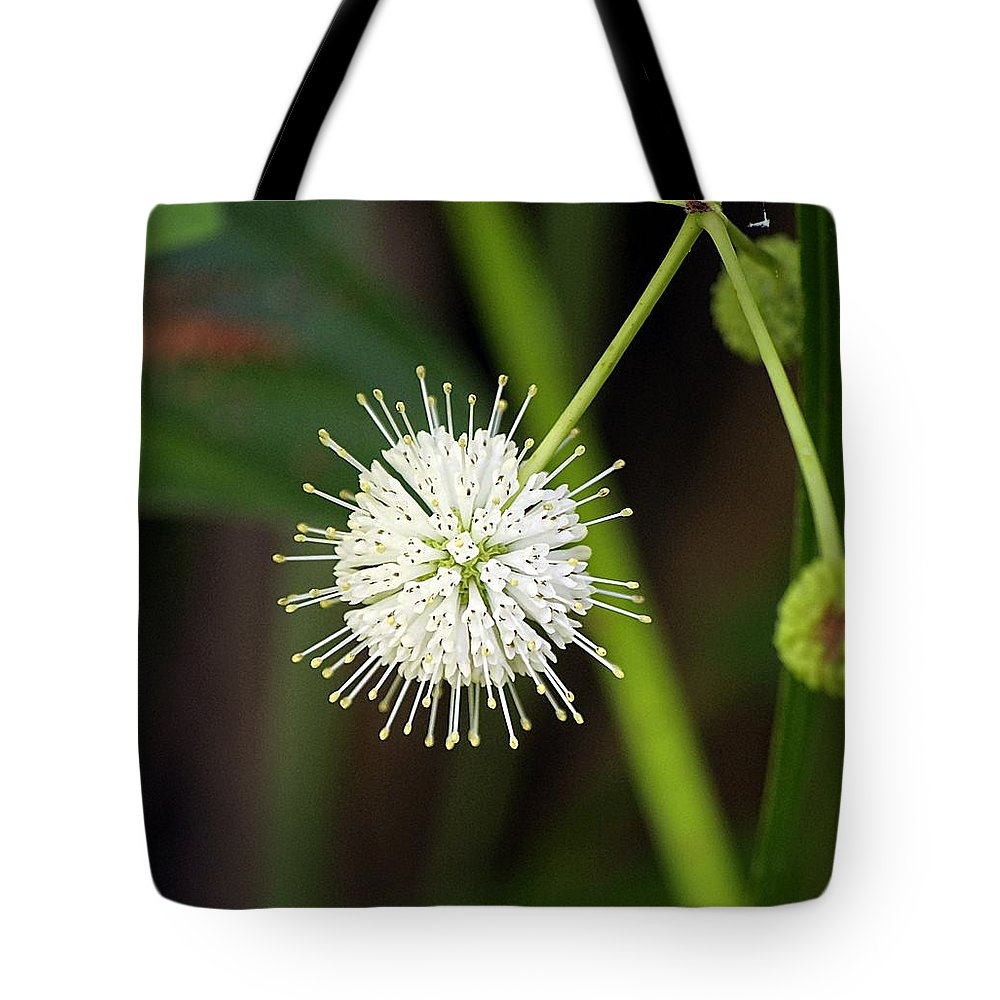 Nature Tote Bag featuring the photograph Button Bush by Kenneth Albin
