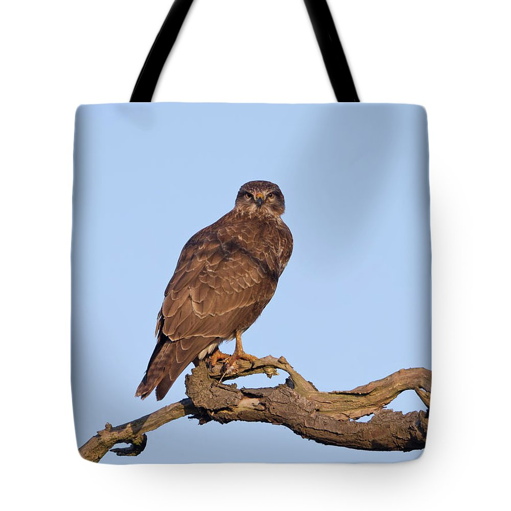Buzzard Tote Bag featuring the photograph Buzzard In Tree by Peter Walkden