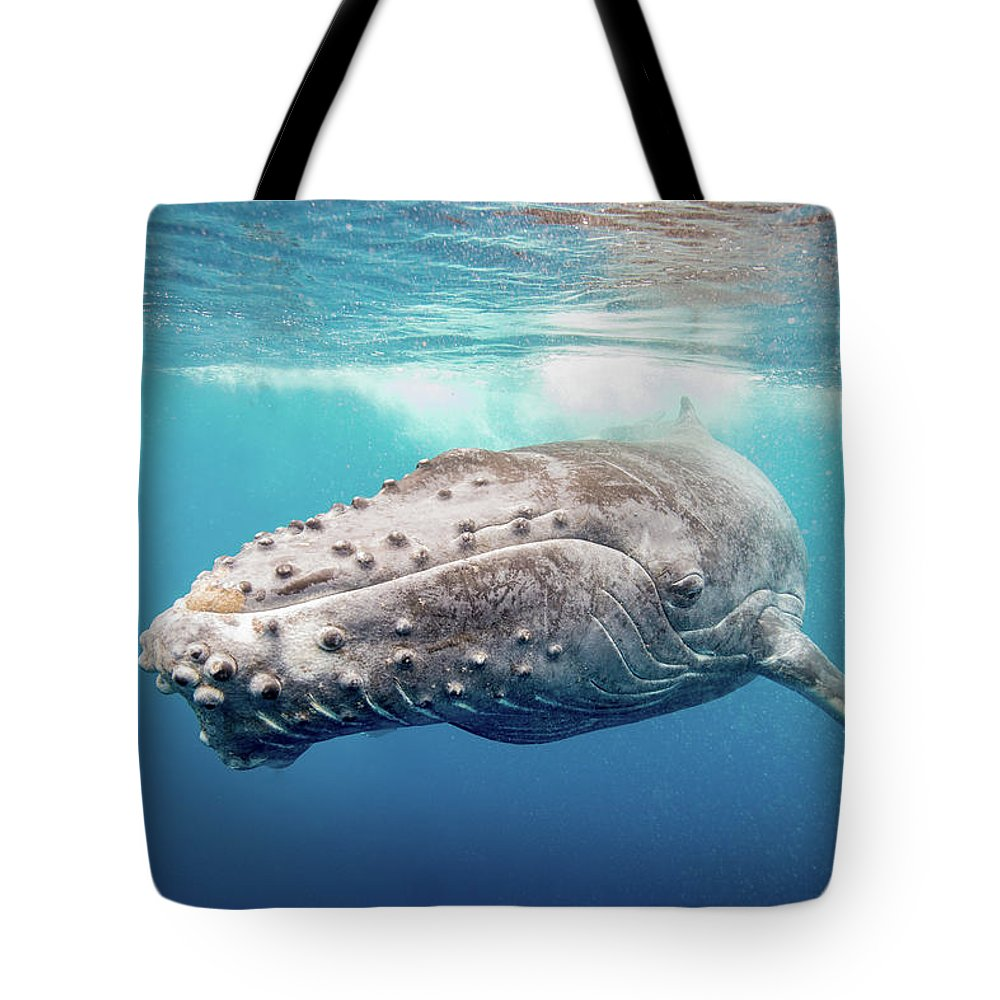 Whale Tote Bag featuring the photograph Calf Greeting by Drew Sulock