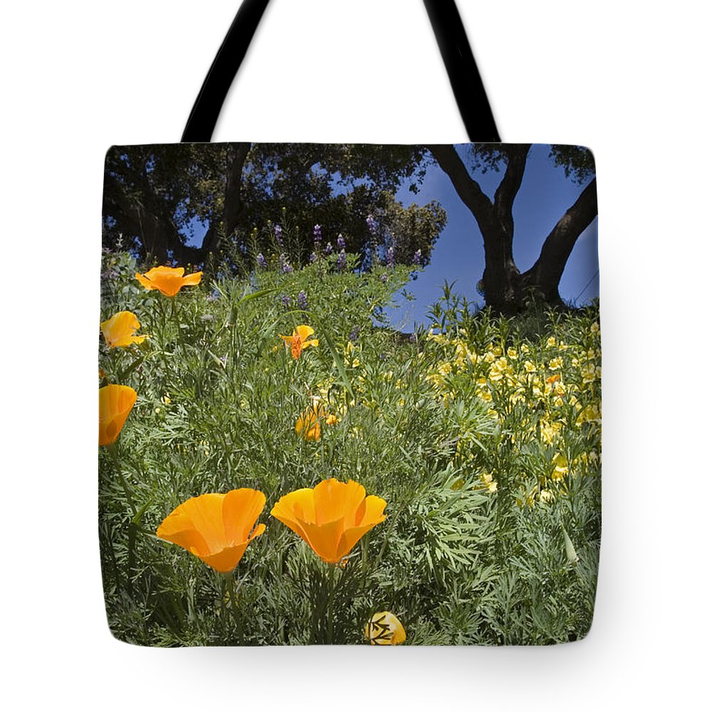 Nobody Tote Bag featuring the photograph California Poppy Eschscholtzia by Rich Reid