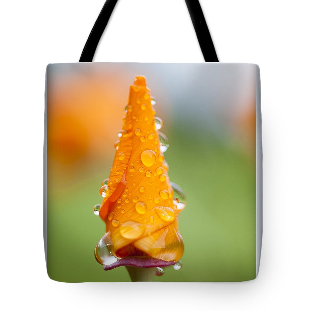 Rain Tote Bag featuring the photograph California Poppy In The Rain by Robert Potts