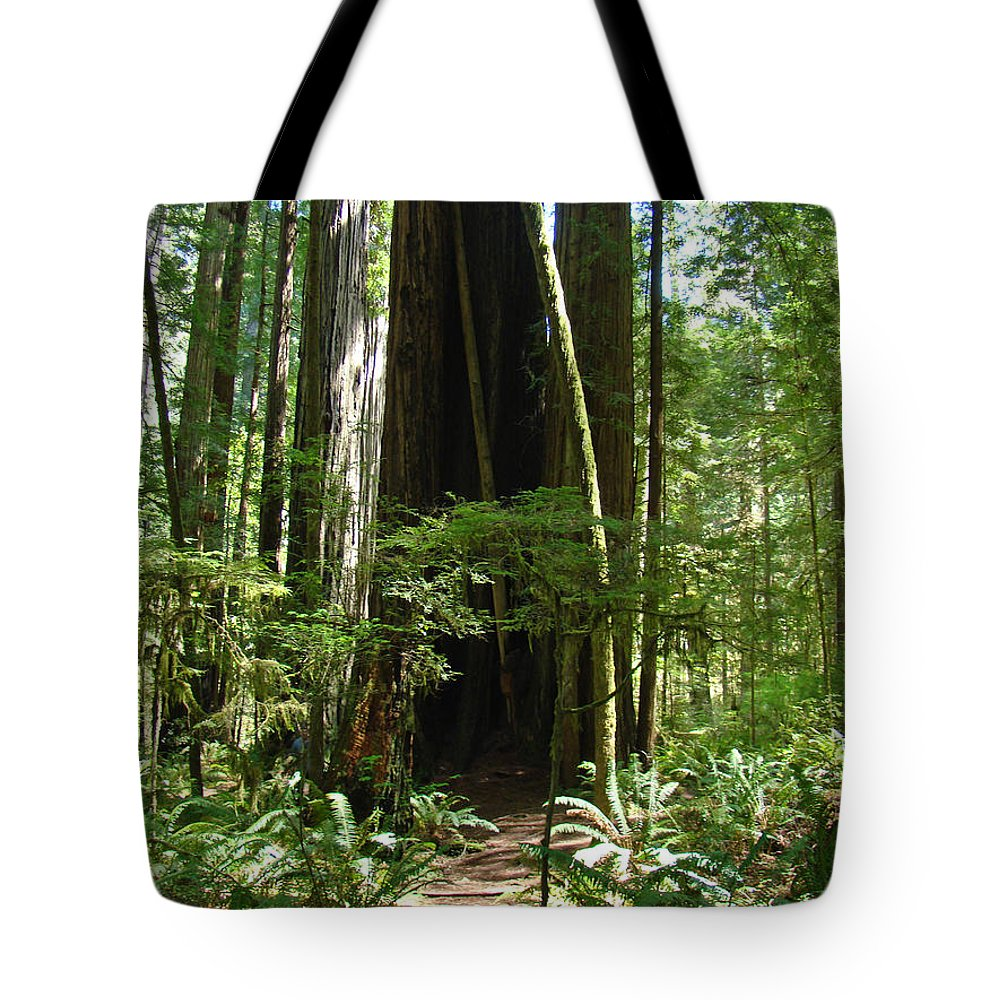 Redwood Tote Bag featuring the photograph California Redwood Trees Forest Art by Baslee Troutman