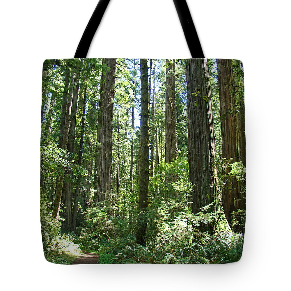 Redwood Tote Bag featuring the photograph California Redwood Trees Forest Art Prints by Baslee Troutman