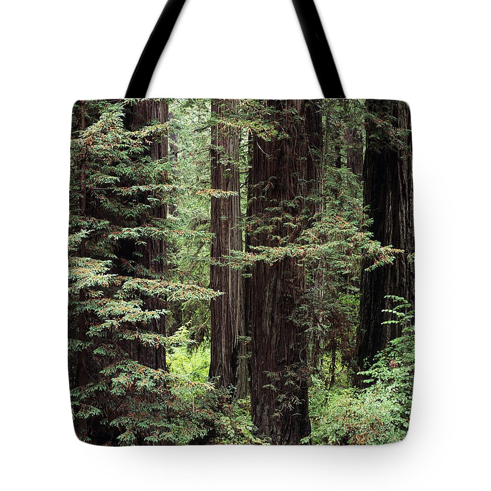 Ancient Tote Bag featuring the photograph California Redwoods by Greg Vaughn - Printscapes