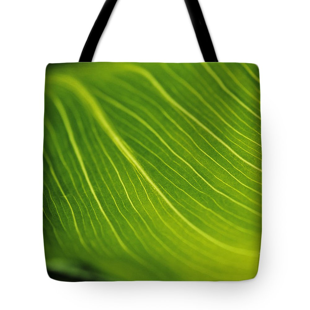 82-csb0004 Tote Bag featuring the photograph Calla Lily Leaf by Larry Dale Gordon - Printscapes