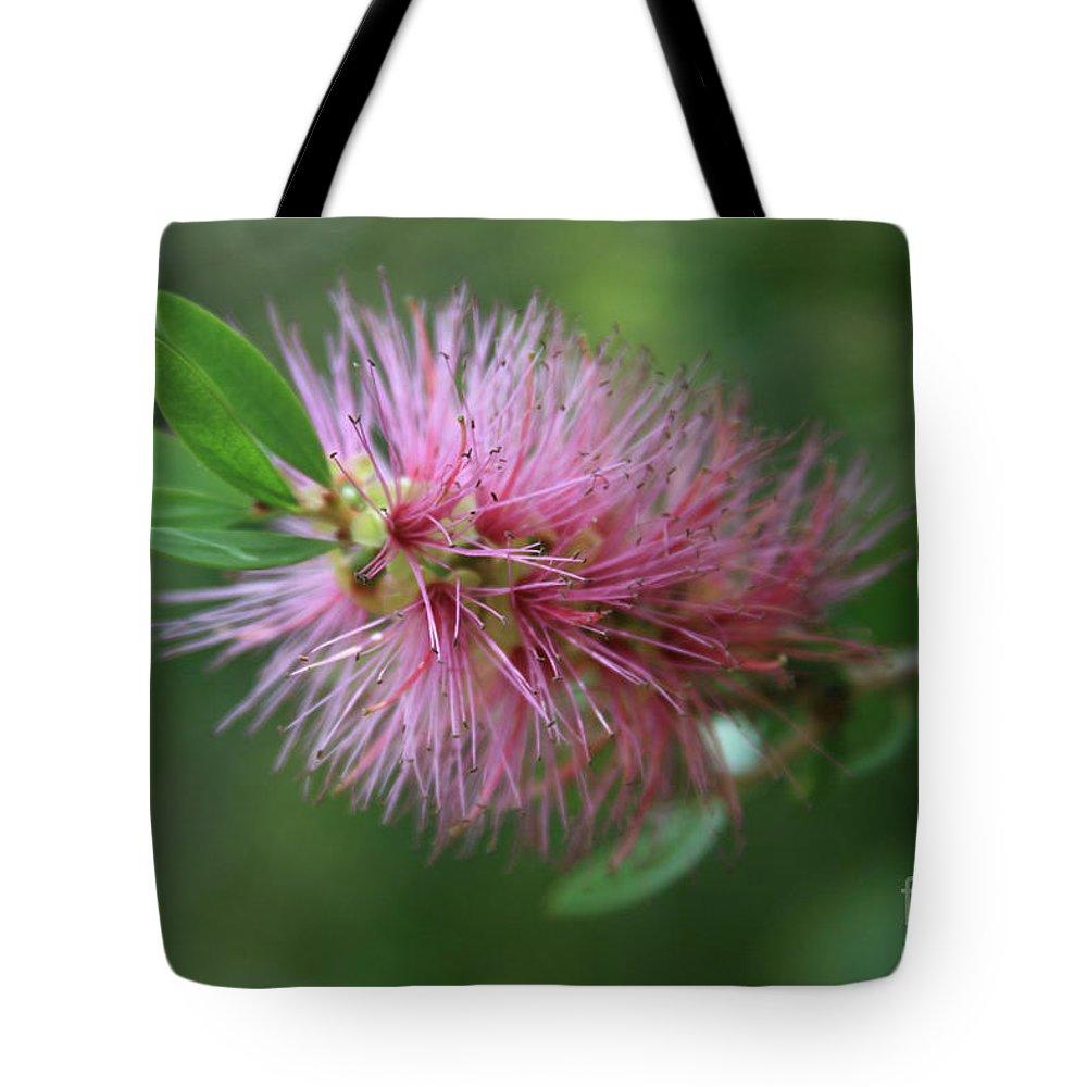 Callistemon Viminalis Tote Bag featuring the photograph Callistemon Viminalis Taree Pink Weeping Bottlebrush Flowering Trees Of Hawaii by Sharon Mau