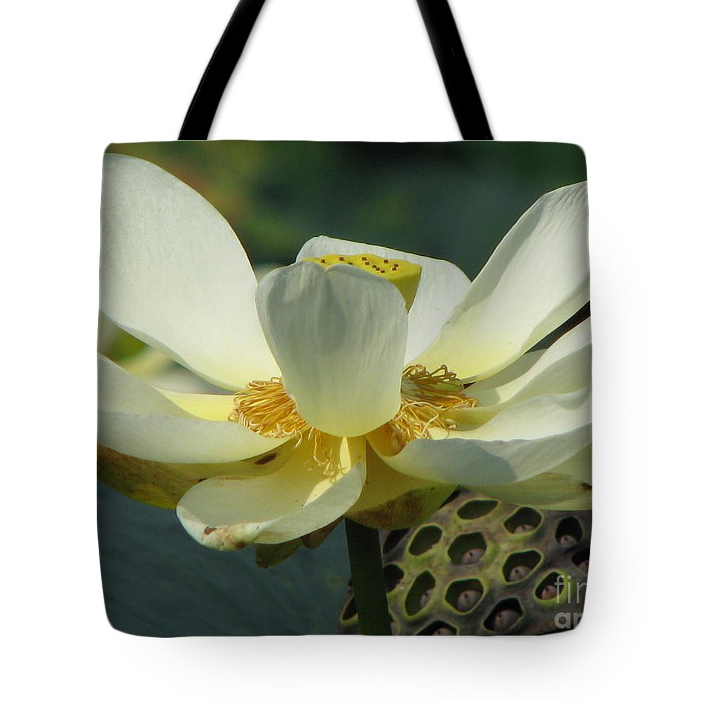Lotus Tote Bag featuring the photograph Calm by Amanda Barcon