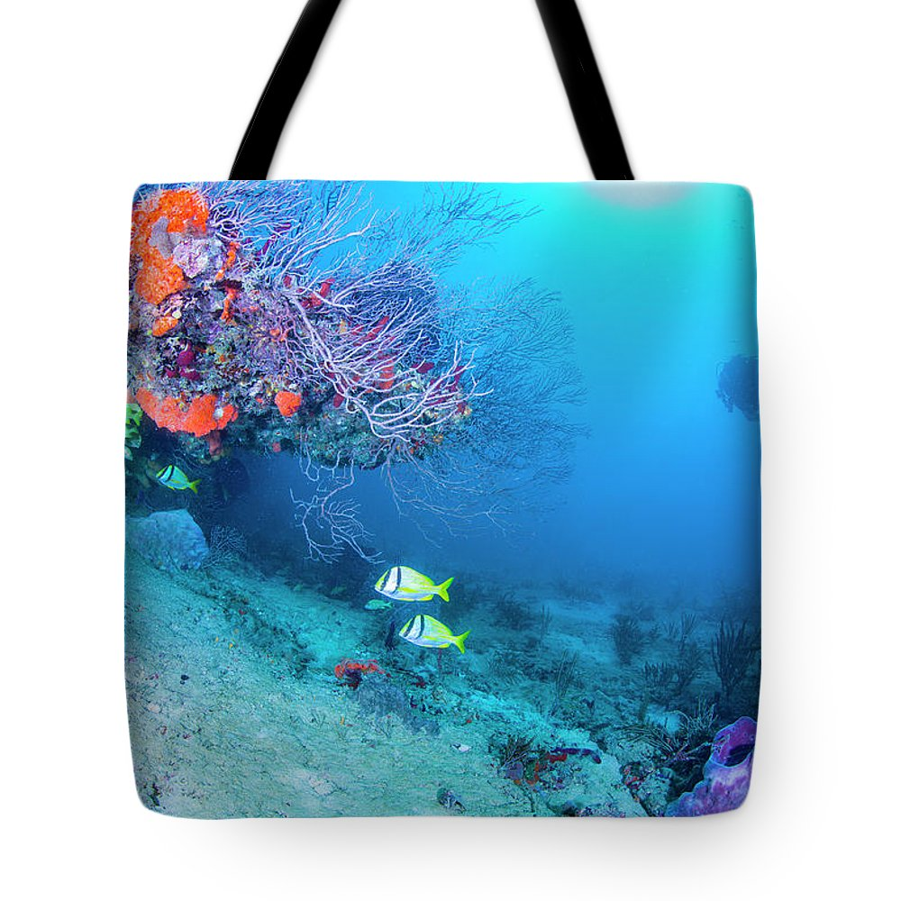 Scene Tote Bag featuring the photograph Calm by Sandra Edwards