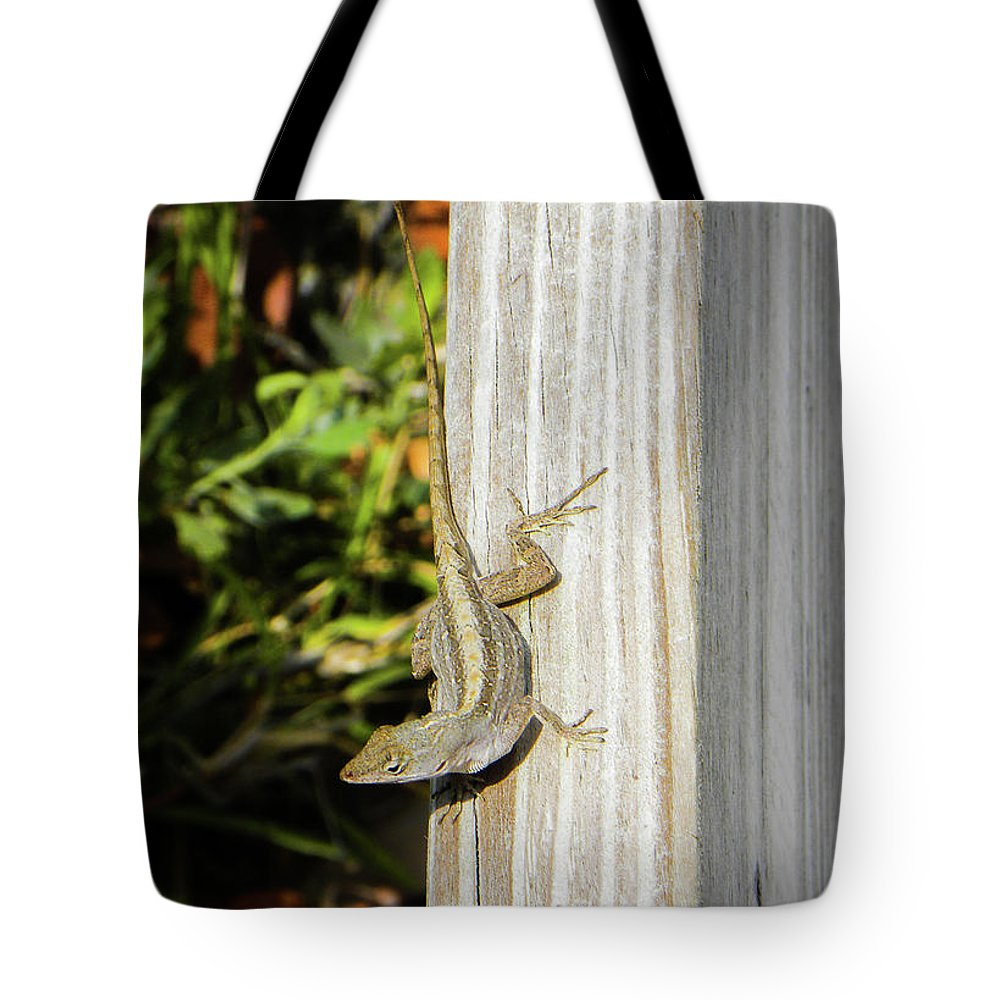 Lizard Tote Bag featuring the photograph Came Right Up by Ric Schafer