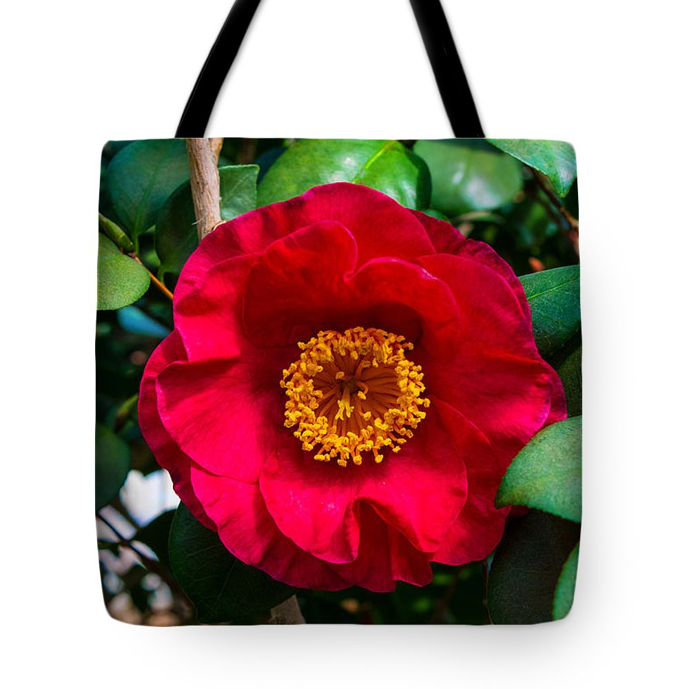 Camellia Tote Bag featuring the photograph Camellia by Robert Edgar